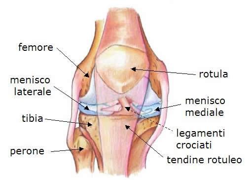 Tendine rotuleo e tendinopatie
