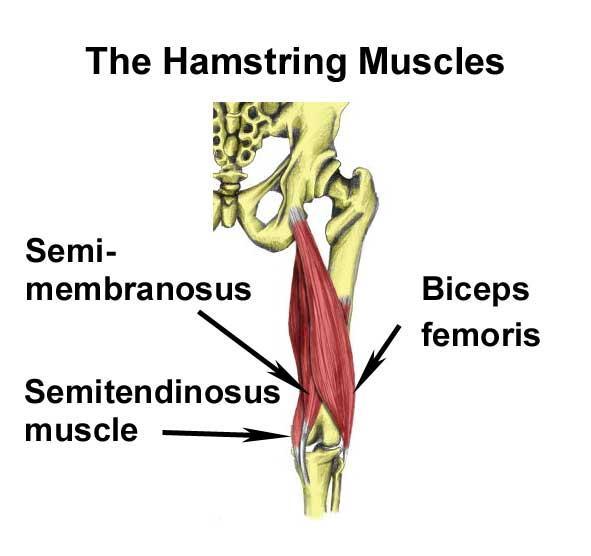 Hamstring, Corsa & Stretching: Flessioni a gamba tesa