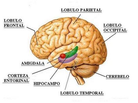 Come lo stress può portare a disturbi cardiovascolari: il ruolo dell'amigdala
