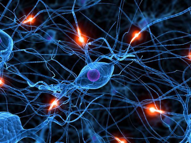 Plasticità cerebrale: studi confermano crescita cervello anche in età adulta
