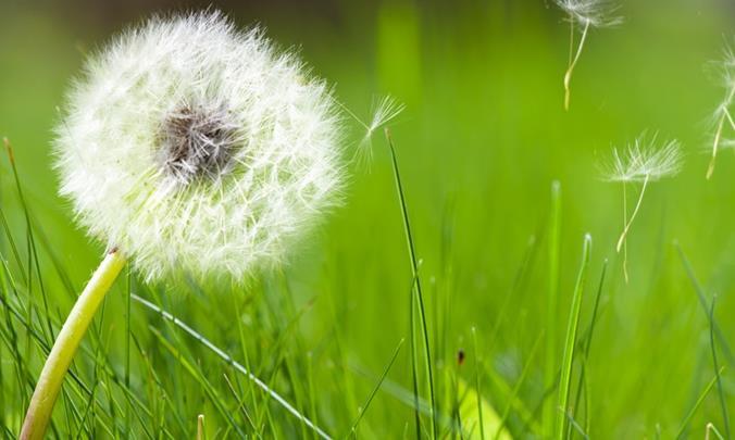 Allergie primaverili: consigli