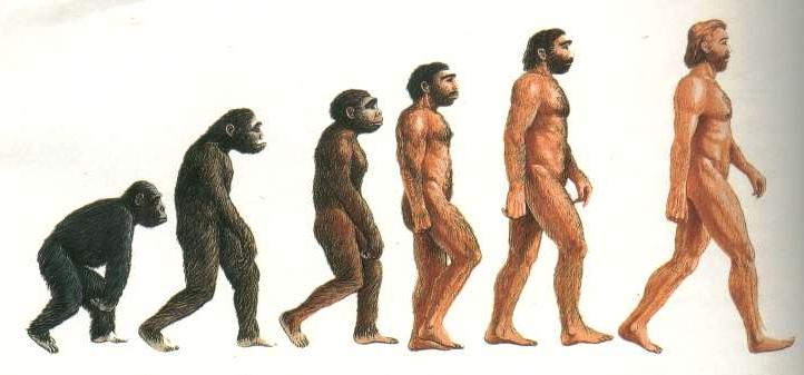 Come è cambiata la camminata umana dagli scimpanzé a noi