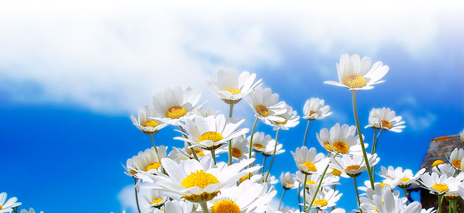 Primavera: c'è a chi fa bene ma c'è anche a chi fa male