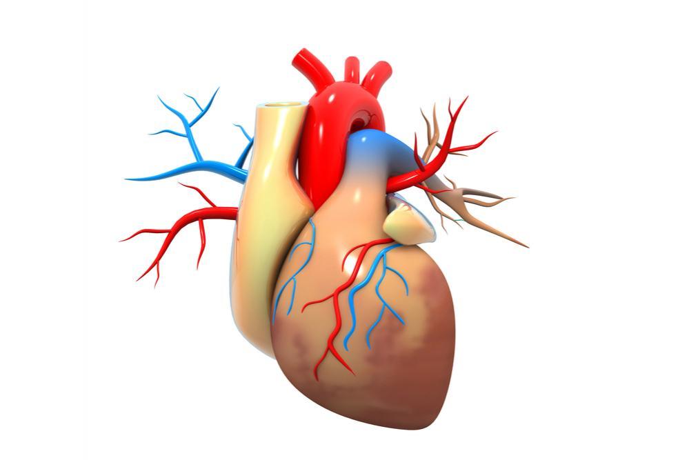 Bassa istruzione, stress e povertà danneggiano la salute del cuore