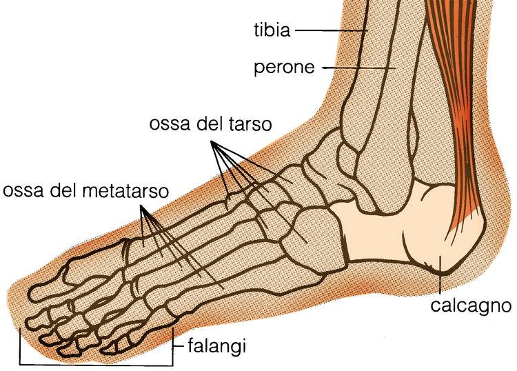 In moto in salute: i traumi fratturativi del piede