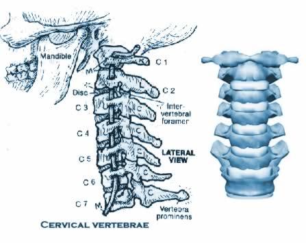 Disturbi alla cervicale: ecco perché non dovresti sottovalutarli