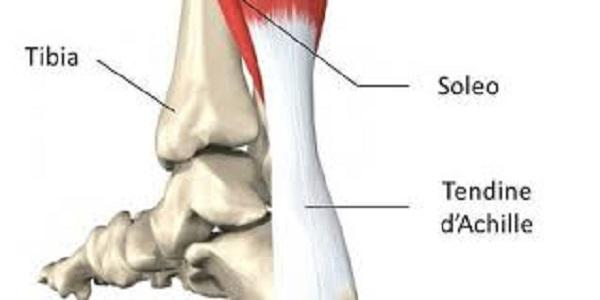 La tendinite dell'Achilleo: anche il tendine si ammala